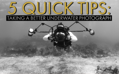 5 Quick Tips For Taking Better Underwater Photographs