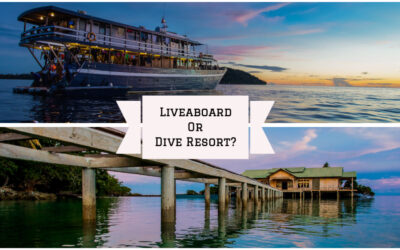 Livaboard Vs. Resort Diving – Pros and Cons